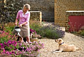 RICKYARD BARN GARDEN  NORTHAMPTONSHIRE: JANE NICHOLS WATERING CONTAINERS. MURPHY THE DOG LYING ON THE GRAVEL
