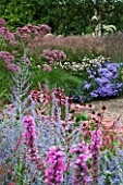 LADY FARM  SOMERSET: DESIGNER  JUDY PEARCE - NEW PERENNIAL BORDERS WITH ASTER FRIKARTII MONCH  ANEMONE TOMENTOSA ROBUSTISSIMA  EUPATORIUM PURPUREUM  LYTHRUM FIRE CANDLE  PEROVSKIA