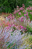 LADY FARM  SOMERSET: DESIGNER  JUDY PEARCE - NEW PERENNIAL BORDER WITH PEROVSKIA BLUE SPIRE  ECHINACEA RUBINSTERN  LYTHRUM FIRE CANDLE  EUPATORIUM PURPUREUM