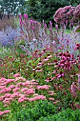 LADY FARM  SOMERSET: DESIGNER  JUDY PEARCE - NEW PERENNIAL BORDER WITH PEROVSKIA BLUE SPIRE  ECHINACEA RUBINSTERN  SEDUM AUTUMN JOY  LYTHRUM FIRE CANDLE  EUPATORIUM PURPUREUM