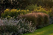 THE GRAY HOUSE  OXFORDSHIRE  DESIGNED BY TIM REES: BORDER BESIDE THE SWIMMING POOL WITH GAURA LINDHEIMERI AND HELIANTHUS LEMON QUEEN