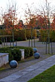 MARKS HALL  ESSEX: AUTUMN COLOUR IN THE WALLED GARDEN - THE GARDEN OF SPHERES WITH STONE BALLS  AND AMELANCHIER X GRANDIFLORA ROBIN HILL. HORNBEAM HEDGE IN THE BACKGROUND
