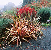 NEW ZEALAND FLAX (PHORMIUM TENAX) IN AUTUMN. THE DINGLE  WALES