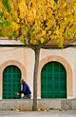 SUITE.DO. MAN CYCLING BESIDE A TREE IN SES SALINAS. MALLORCA  SPAIN