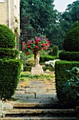 VIEW UP STEPS THROUGH YEW TOPIARY TO TERRACE WITH CONTAINER OF TRAILING PELARGONIUMS. LITTLE BOWDEN GARDEN  BERKSHIRE