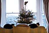 BOONSHILL FARM AT CHRISTMAS: LIVING ROOM WITH CHRISTMAS TREE BESIDE THE FRONT WINDOW AND TWO CATS SLEEPING ON THE SETTEE. DESIGNER: LISETTE PLEASANCE