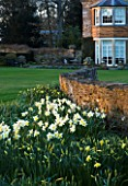 THE OLD RECTORY  HASELBECH  NORTHAMPTONSHIRE - VIEW TOWARDS THE RECTORY FROM THE LAWN WITH  NARCISSUS SPRING DAWN AND STONE WALL - EVENING LIGHT