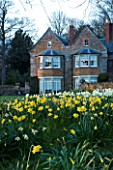 THE OLD RECTORY  HASELBECH  NORTHAMPTONSHIRE - VIEW TOWARDS THE RECTORY FROM THE LAWN WITH DAFFODILS - EVENING LIGHT