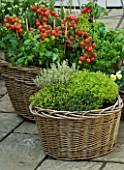DESIGNERS SUE AYLETT AND GAY SEARCH: WICKER BASKET COTTAGE STYLE CONTAINERS IN COURTYARD PLANTED WITH THYMES (HERBS) AND TOMATOES. VEGETABLE