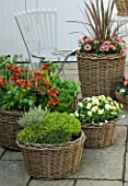 DESIGNERS SUE AYLETT AND GAY SEARCH: WICKER BASKET COTTAGE STYLE CONTAINERS IN COURTYARD PLANTED WITH VIOLAS  THYMES (HERBS) AND TOMATOES. VEGETABLE