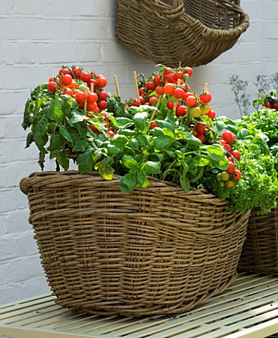 DESIGNERS_SUE_AYLETT_AND_GAY_SEARCH_WICKER_BASKET_COTTAGE_STYLE_CONTAINER_IN_COURTYARD_ON_METAL_TABL