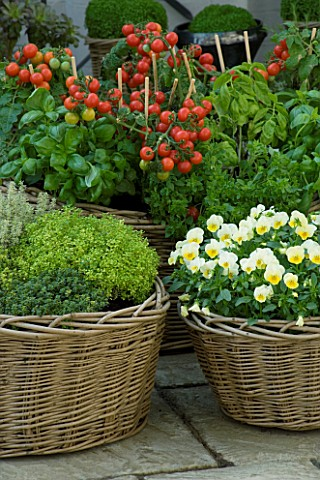 DESIGNERS_SUE_AYLETT_AND_GAY_SEARCH_WICKER_BASKET_COTTAGE_STYLE_CONTAINERS_IN_COURTYARD_PLANTED_WITH