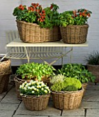 DESIGNERS SUE AYLETT AND GAY SEARCH: WICKER BASKET COTTAGE STYLE CONTAINERS IN COURTYARD AROUND AND ON A METAL TABLE PLANTED WITH TOMATOES  BASIL  VIOLAS AND THYMES. VEGETABLE