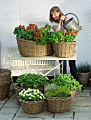 DESIGNERS SUE AYLETT AND GAY SEARCH: SUE AYLETT WATERING WICKER BASKET COTTAGE STYLE CONTAINERS IN COURTYARD PLANTED WITH TOMATOES  BASIL  VIOLAS AND THYMES. VEGETABLE