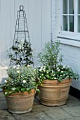 DESIGNERS SUE AYLETT AND GAY SEARCH: SILVER THEMED TERRACOTTA CONTAINERS AND OBELISK IN COURTYARD PLANTED WITH WHITE CLEMATIS  MARGUERITES  PITTOSPORUM