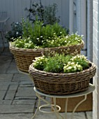 DESIGNERS SUE AYLETT AND GAY SEARCH: WHITE THEMED WICKER BASKET COTTAGE STYLE CONTAINERS PLANTED WITH ROSEMARY AND CHIVES IN COURTYARD ON METAL TABLES