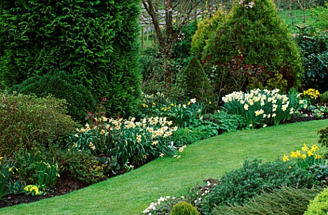THE_BORDERS_BY_THE_LAWN_WITH_NARCISSI_SEMPRE_AVANTI_L_AND_NARCISSI_ICE_FOLLIES__CHIFFCHAFFS_GARDEN__