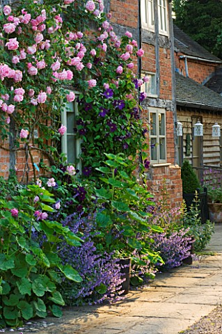 WOLLERTON_OLD_HALL__SHROPSHIRE_SOUTH_WALL_OF_THE_COTTAGES_WITH_ROSA_CAROLINE_TESTOUT_AND_CLEMATIS_VI