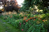 THE GRAY HOUSE  OXFORDSHIRE  DESIGNED BY TIM REES. HERBACEOUS BORDER IN SUMMER WITH BACKLIT STIPA TENUISSIMA AMD POPPIES