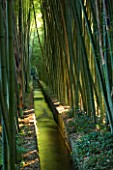 LA BAMBOUSERAIE DE PRAFRANCE  FRANCE: WATER RILL RUNNING THROUGH THE GARDEN SURROUNDED BY GIANT BAMBOOS