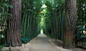 LA BAMBOUSERAIE DE PRAFRANCE  FRANCE: STRAIGHT PATH WITH PHYLLOSTACHYS SULPHUREA VAR VIRIDIS AND SEQUOIA SEMPERVIRENS