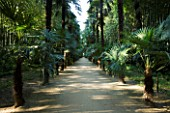 LA BAMBOUSERAIE DE PRAFRANCE  FRANCE: PATH THROUGH THE CHINESE PALM TREE WALK (TRACHYCARPUS FORTUNEI)