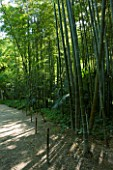 LA BAMBOUSERAIE DE PRAFRANCE  FRANCE: PATH THROUGH THE GARDEN SURROUNDED BY BAMBOOS