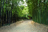LA BAMBOUSERAIE DE PRAFRANCE  FRANCE: PATH THROUGH BAMBOO GROVES