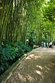 LA BAMBOUSERAIE DE PRAFRANCE  FRANCE: BAMBOOS BESIDE A PATH
