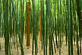 LA BAMBOUSERAIE DE PRAFRANCE  FRANCE: BAMBOOS WITH 200 SHEETS OF WOOD SCULPTURE MUSIQUE DE SILENCE BY REGINE LEHMANN