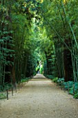 LA BAMBOUSERAIE DE PRAFRANCE  FRANCE: THE MAIN WALKWAY WITH PHYLLOSTACHYS SULPHUREA VAR VIRIDIS AND SEQUOIA SEMPERVIRENS