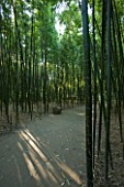 LA BAMBOUSERAIE DE PRAFRANCE  FRANCE: PATH THROUGH THE BAMBOO FOREST