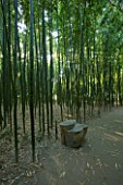 LA BAMBOUSERAIE DE PRAFRANCE  FRANCE: PATH THROUGH THE BAMBOO FOREST WITH WOODEN SEAT