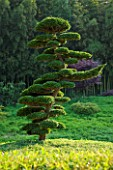 LA BAMBOUSERAIE DE PRAFRANCE  FRANCE: THE JAPANESE GARDEN - THE DRAGON VALLEY DESIGNED BY ERIK BORJA - A CLOUD PRUNED CONIFER