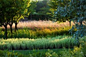 CHATEAU PLAISIR  FRANCE  DESIGNER: PASCAL CRIBIER - THE ORCHARD IN EVENING LIGHT - BALLOTA PSEUDODICTAMNUS AND GAURA