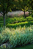 CHATEAU PLAISIR  FRANCE  DESIGNER: PASCAL CRIBIER - THE ORCHARD IN EVENING LIGHT - BALLOTA PSEUDODICTAMNUS  IRISES AND GAURA