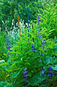 JARDIN DES SAMBUCS  FRANCE - STAKES FOR ATTRACTING INSECTS WITH LARKSPUR AND JERUSALEM ARTICHOKES