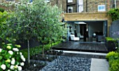 TANIA LAURIE  LONDON. SMALL CONTEMPORARY GARDEN BY CHARLOTTE ROWE. BLACK STAINED DECK WITH CATALPA AND OPHIOPOGON SET INTO GREY POLISHED PEBBLED PATIO AREA