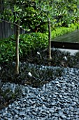 TANIA LAURIE  LONDON. SMALL CONTEMPORARY GARDEN BY CHARLOTTE ROWE. POLISHED GREY PEBBLES WITH OPHIOPOGON PLANISCAPUS NIGRESCENS AND CATALPA