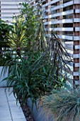 CONTEMPORARY FORMAL ROOF TERRACE/ GARDEN DESIGNED BY DATA NATURE ASSOCIATES: RAISED METAL BED PLANTED WITH SUCCULENTS - PSEUDOPANAX CRASSIFOLIUS AND FESTUCA GLAUCA