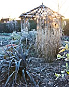 WOLLERTON OLD HALL  SHROPSHIRE: WINTER GARDEN IN FROST -  FROSTY MORNING WITH PHORMIUM TENAX  ALL BLACK AND WOODEN PERGOLA