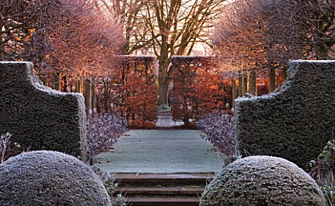 WOLLERTON_OLD_HALL__SHROPSHIRE_WINTER_GARDEN_IN_FROST___VIEW_ALONG_THE_LIME_ALLEE_AT_DAWN_TO_A_CLIPP