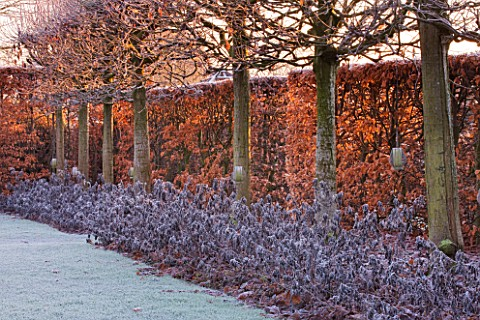 WOLLERTON_OLD_HALL__SHROPSHIRE_WINTER_GARDEN_IN_FROST___VIEW_ALONG_THE_LIME_ALLEE_AT_DAWN_WITH_CLIPP