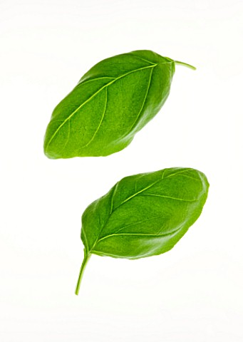 BASIL_LEAF__OCIMUM_BASILICUM_CULINARY__AROMATIC__WHITE_BACKGROUND__CUT_OUT__CLOSE_UP__GREEN__ORGANIC