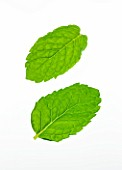 TWO MINT LEAVES - MENTHA. CULINARY  AROMATIC  FRAGRANT  WHITE BACKGROUND  CUT OUT  CLOSE UP  GREEN  ORGANIC