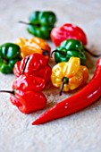 CAPSICUMS - CHILLI SCOTCH BONNET . SPICE  SPICES  HOT  EDIBLE  PICKED  CHILLIES  YELLOW  RED  GREEN