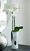 CHRISTMAS - WHITE ORCHID IN BLACK AND WHITE GLASS CONTAINER IN LIVING ROOM. SARAH EASTEL LOCATIONS/ DI ABLEWHITE