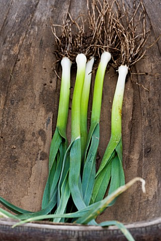 DESIGNER_CLARE_MATTHEWS_POTAGER_PROJECT__FRESHLY_DUG_LEEKS_ATAL__VEGETABLE