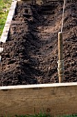 DESIGNER CLARE MATTHEWS: POTAGER PROJECT - CHANNEL DUG OUT OF SOIL READY FOR ASPARAGUS PLANTING