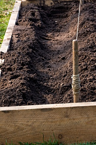 DESIGNER_CLARE_MATTHEWS_POTAGER_PROJECT__CHANNEL_DUG_OUT_OF_SOIL_READY_FOR_ASPARAGUS_PLANTING